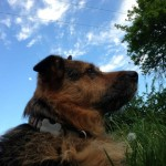 Unser Hund